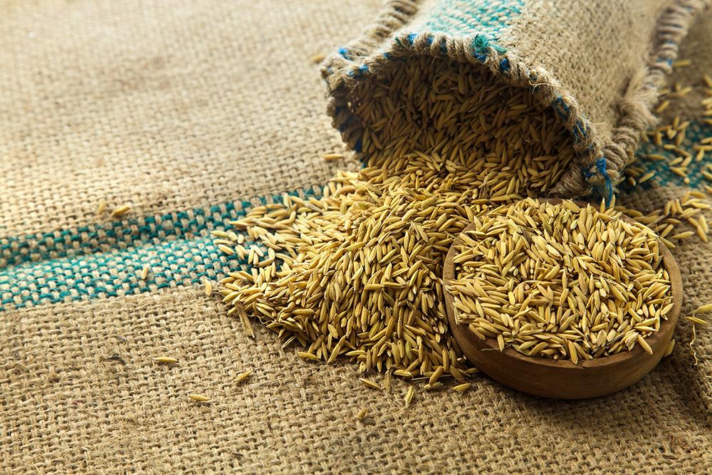 稻米(2M)shutterstock_152800553